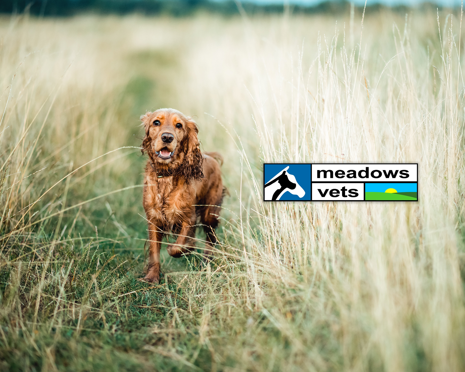 Meadows Vets Supporting NDS 2020